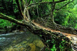 Building Biodegradable Bridges As A Sustainable Alternative