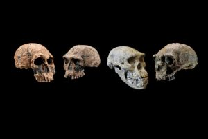 Recent Discoveries Have Changed Our Theory Of Human Evolution