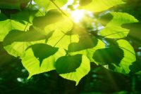 Scientists Resolved Mystery of Photosynthesis