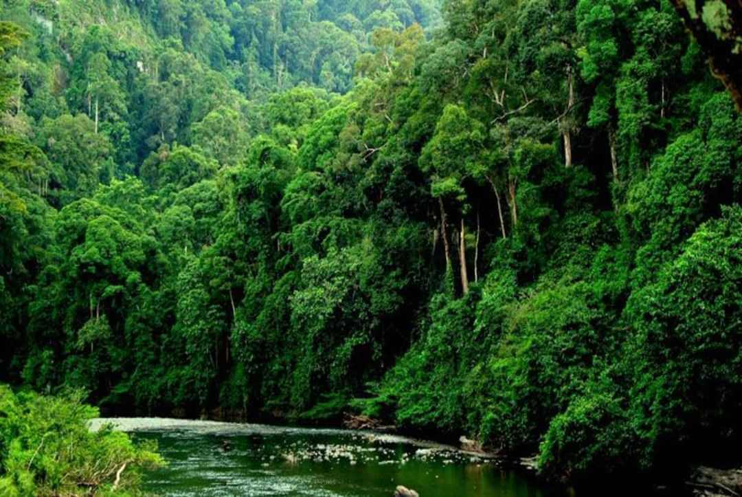 Scientists To Identify Priority Forests For Protection In Borneo