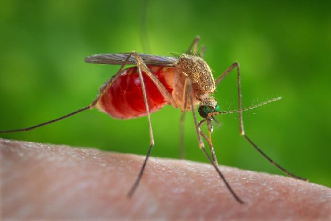 X-ray Imaging Discovered A Natural Mosquito-killing Compound
