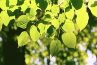 Scientists Identified A New Temperature Sensing Mechanism In Plants