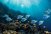 A Microplastic Invasion Is Affecting The Immune System Of Aquatic Organisms