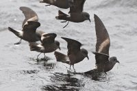 Bird Droppings Shed light On Environmental Change