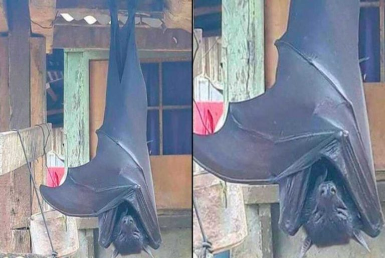 Image of Human-Sized' Bat Is Giving People Nightmares. But Is It Real?