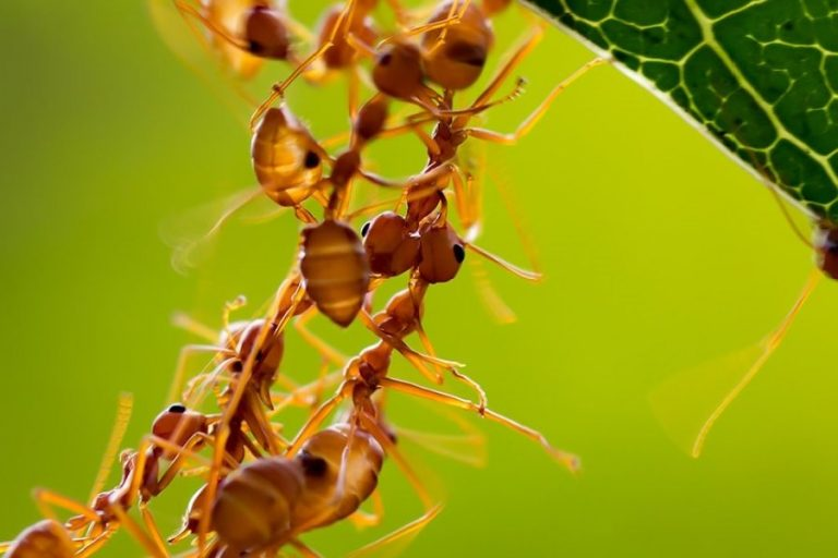 Distributed computation in ant colonies-Research