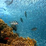 Temperature drops might bleach Red Sea coral reefs: study