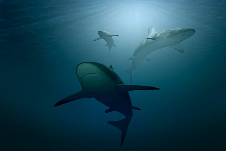 Sharks use Earth's magnetic field to navigate oceans: study
